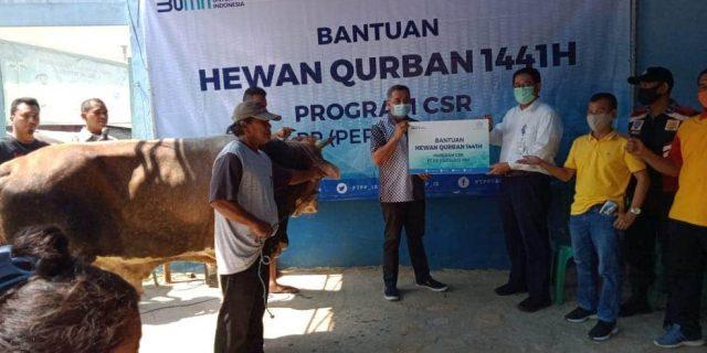 PT. PP Persero Qurban 1 Ekor Sapi dan 250 sembako